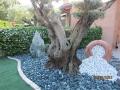 Giardini Zen (3)