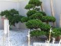 Giardini Zen (7)