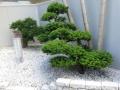 Giardini Zen (8)