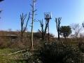 Potatura alberi alto fusto (1)