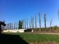 Potatura alberi alto fusto (10)