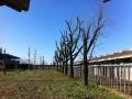 Potatura alberi alto fusto (13)
