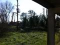 Potatura alberi alto fusto (14)