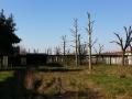 Potatura alberi alto fusto (17)