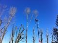 Potatura alberi alto fusto (3)