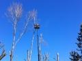 Potatura alberi alto fusto (6)