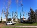 Potatura alberi alto fusto (9)