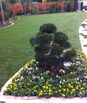 Piante-da-giardino